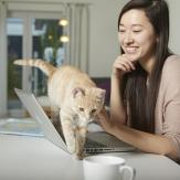 Woman smiling as ginger cat walks over laptop